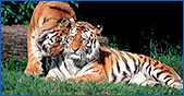 Wildlife Holidays, Tour Packages In India
